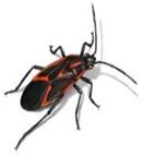Seasonal Pests