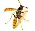 Season-long bee/wasp program